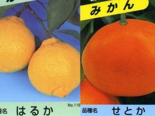 Kazyu_kankitu023